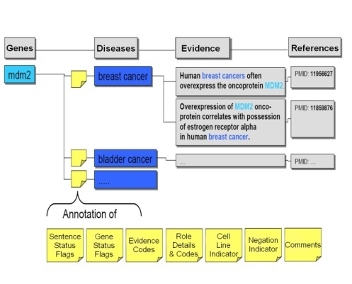 This figure illustrates the process by which curators read sentences extracted by Biomax LT and validated that they truly contained the configured information. More details are provided in the text.